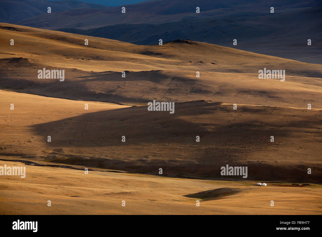 Two gers at the foot of the Tsaast Uul Mountains, surrounded by a family's herd resting in the late afternoon - Stock Image