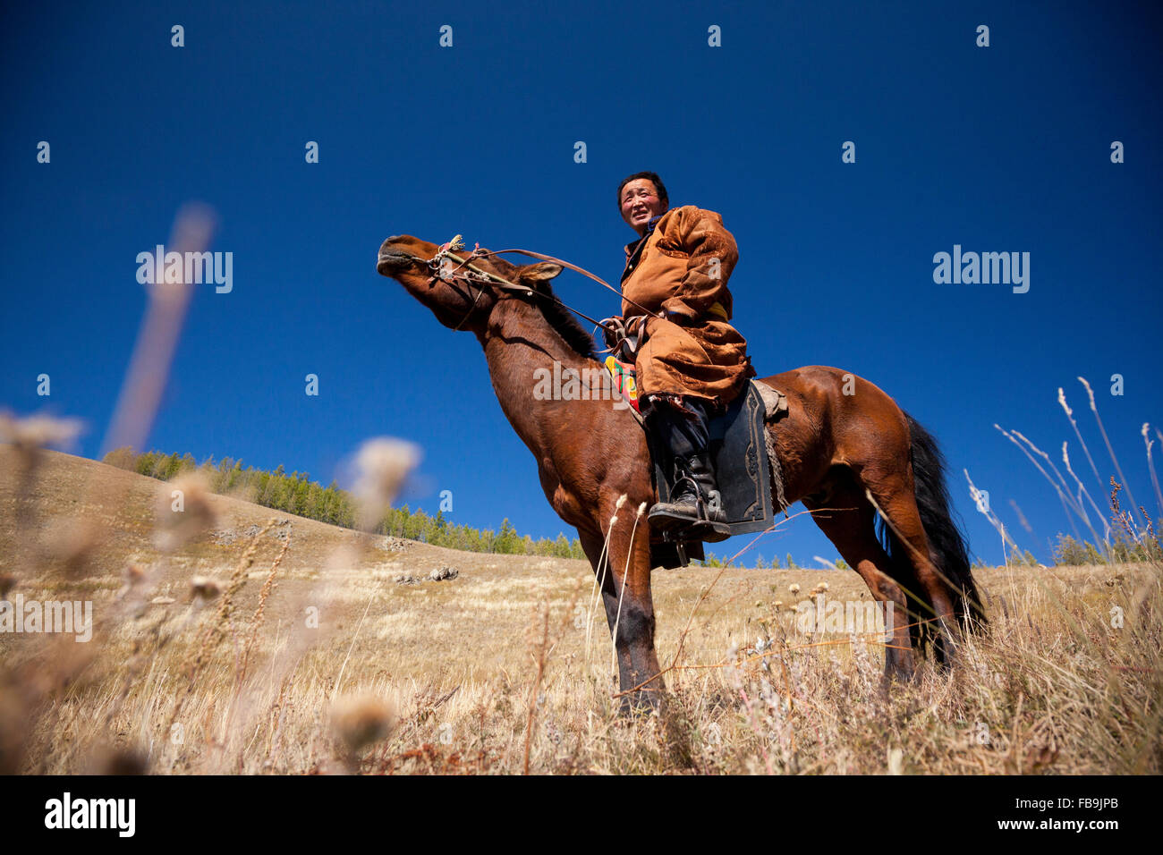 A herder's horse nodding in the late summer heat in Gorkhi Terelj National Park, Mongolia. - Stock Image