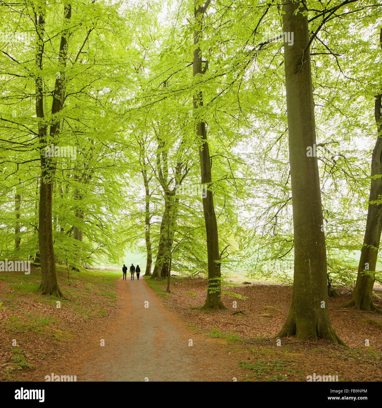 Sweden, Skane, People walking in forest - Stock Image