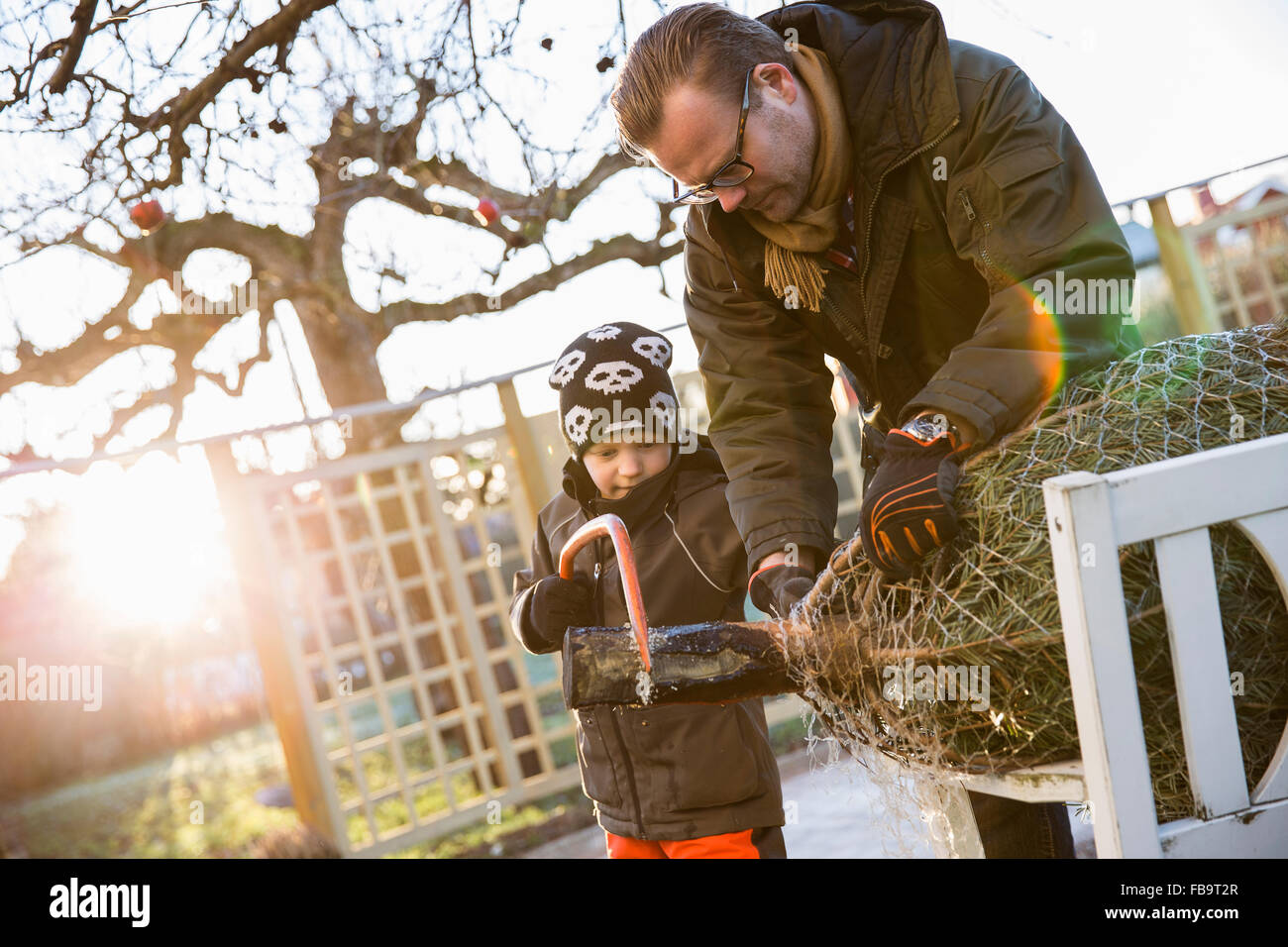 Sweden, Sodermanland, Alvsjo, Father with son (6-7) sawing fir tree on backyard - Stock Image