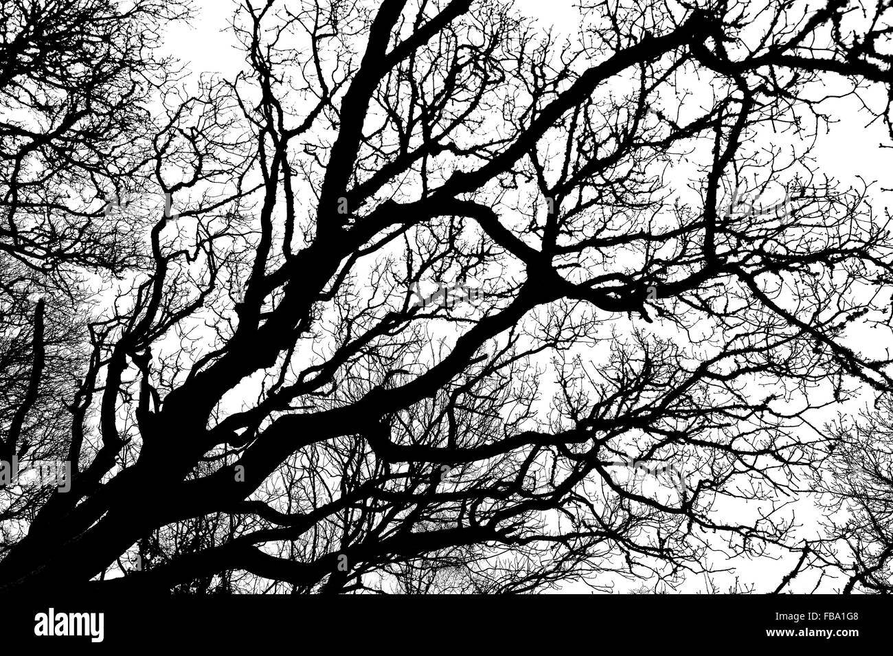 Black and white abstract silhouette of winter tree branches