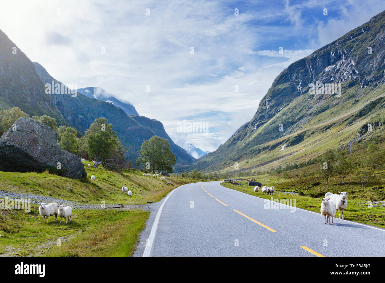 Norway, More og Romsdal, Sunnmore, View of sheep by road in mountains - Stock Image