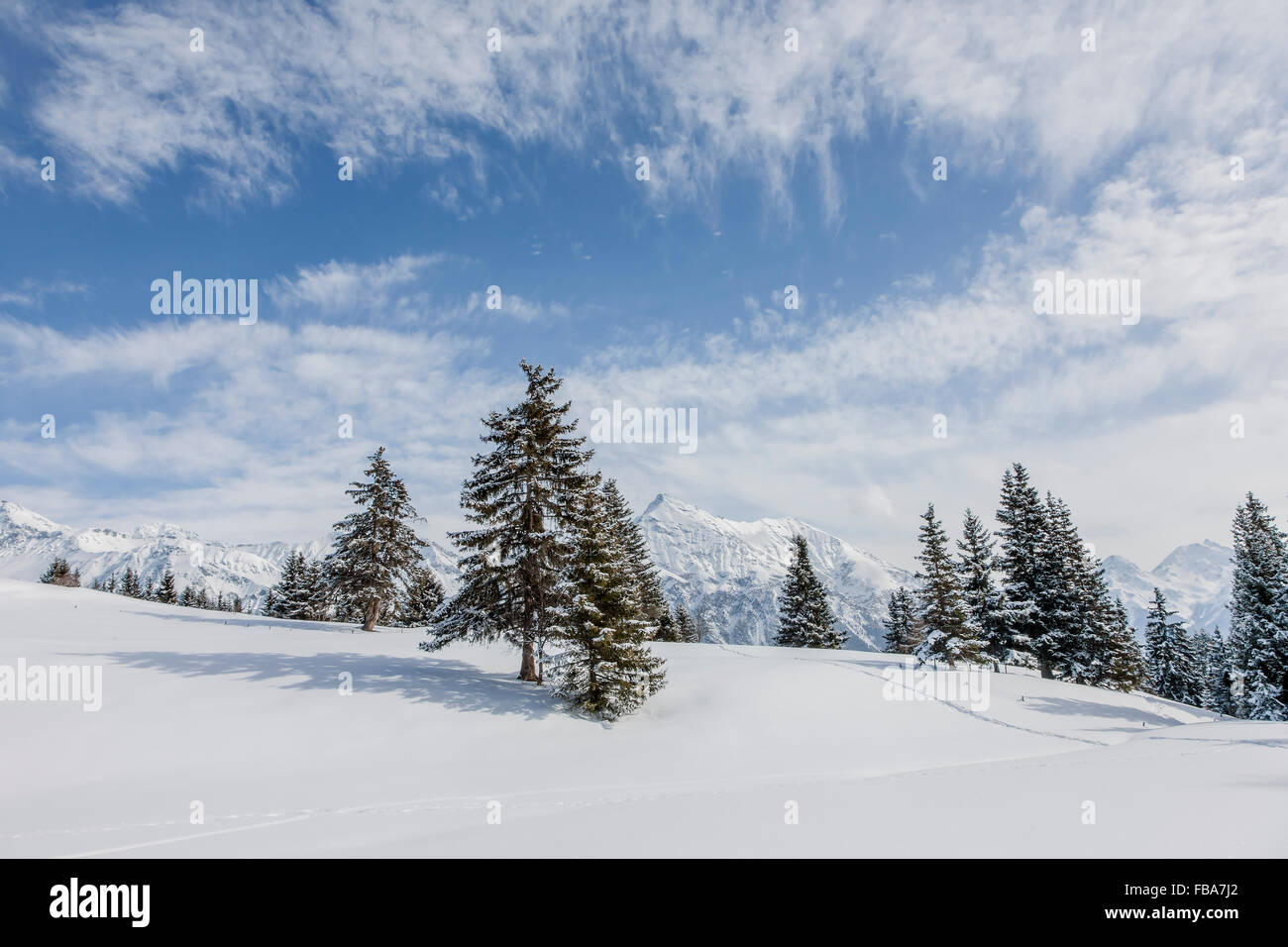 Switzerland, Lenzerheide, Spruce trees on snowy hill - Stock Image