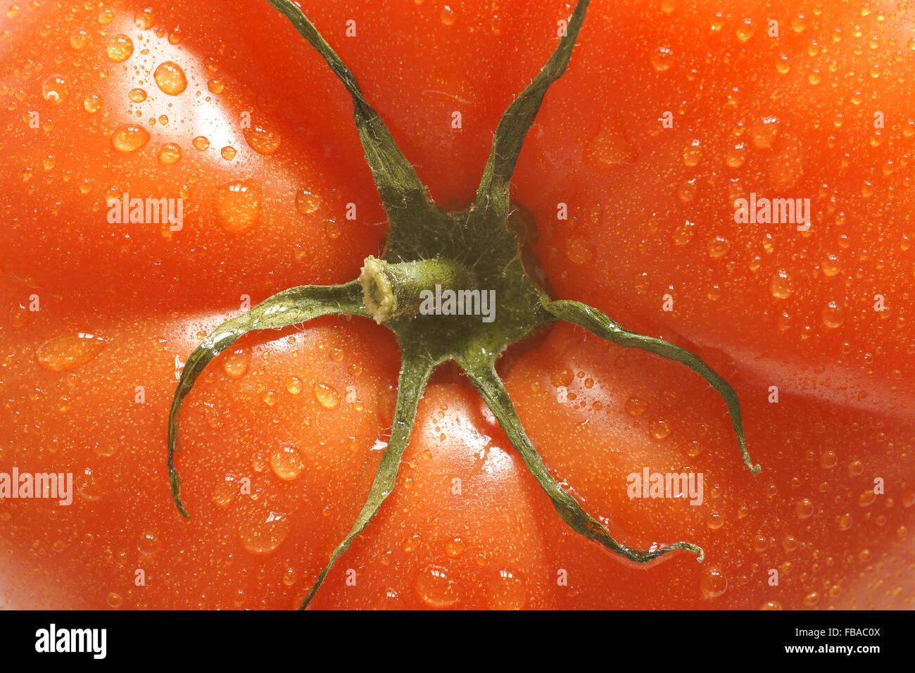 Fresh and plump beefsteak tomato close up on center stalk - Stock Image