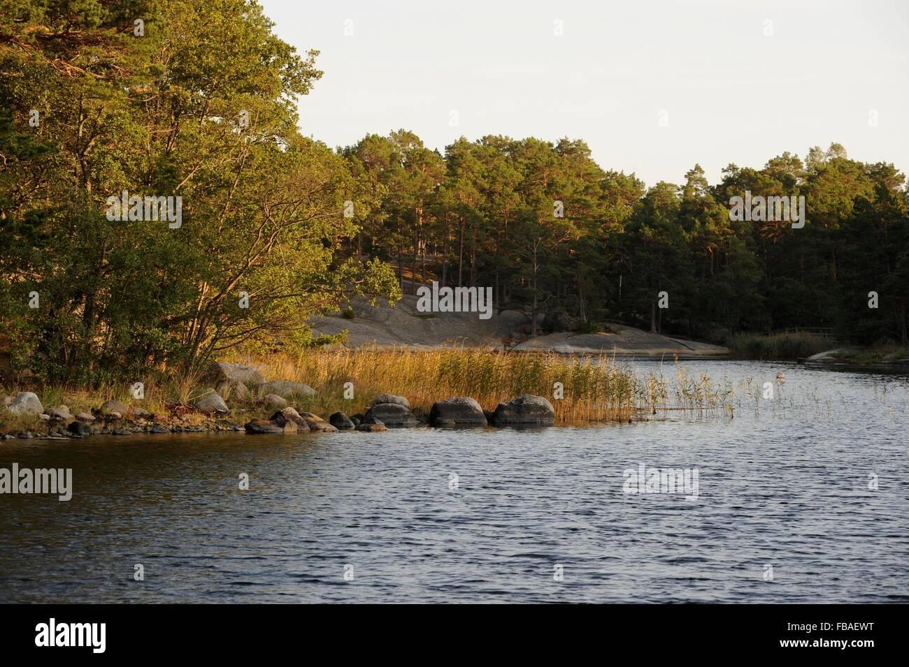 coast of the Stockholm Archipelago - Stock Image