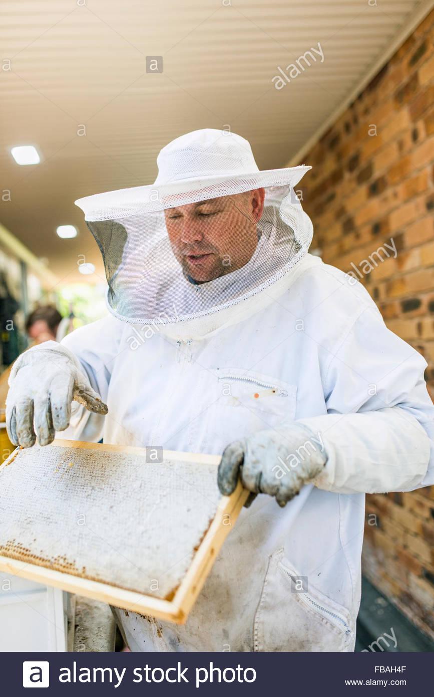 Australia, Queensland, Beekeeper holding honeycomb - Stock Image