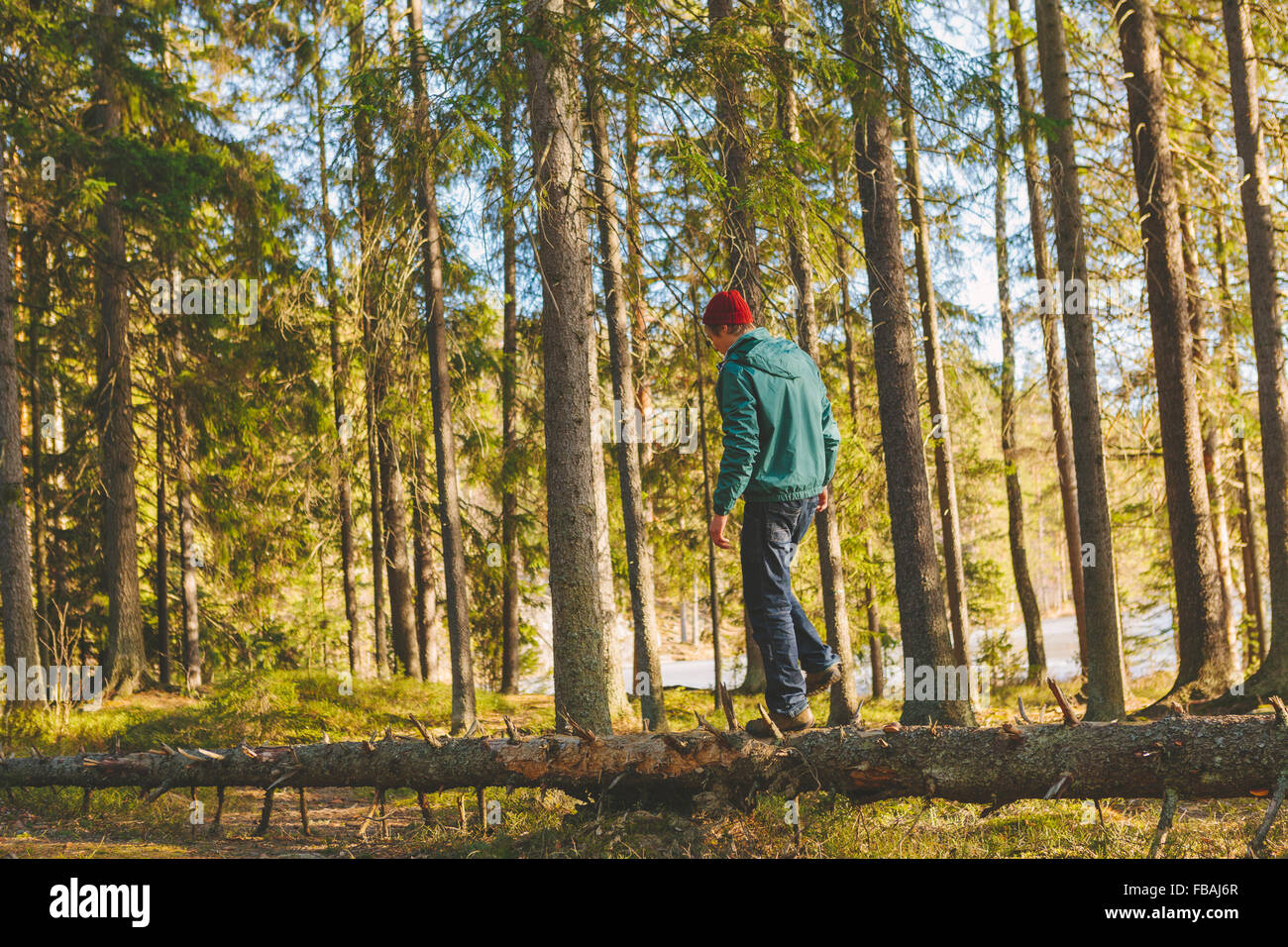 Finland, Esbo, Kvarntrask, Young man walking on trunk of fallen tree in forest - Stock Image