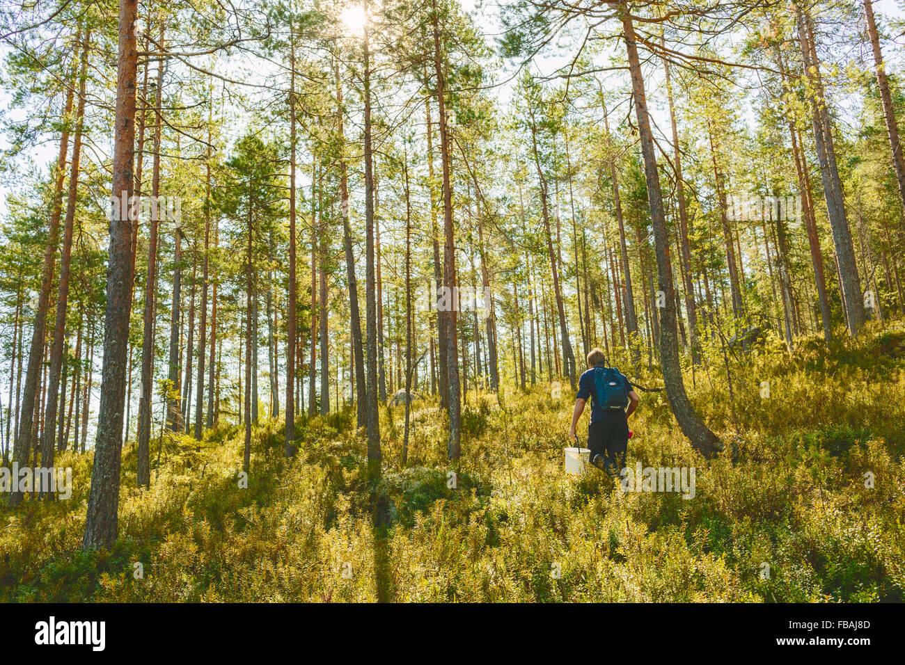 Finland, Keski-Suomi, Jyvaskyla, Man walking in pine forest Stock Photo