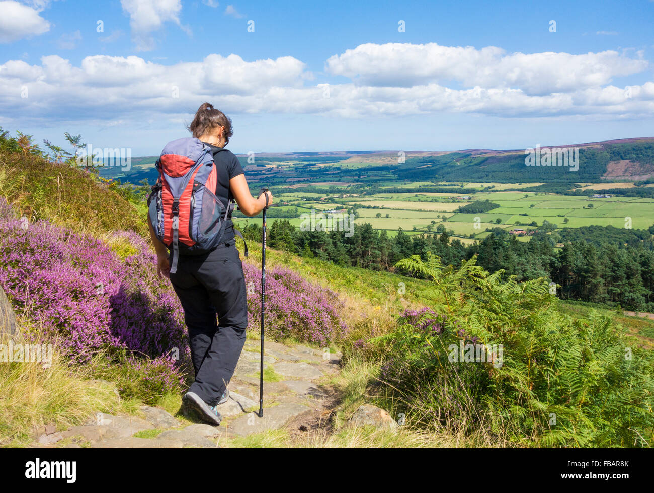 Female hiker walking the Cleveland Way on Hasty Bank on The Cleveland Hills, North York Moors National Park, North - Stock Image