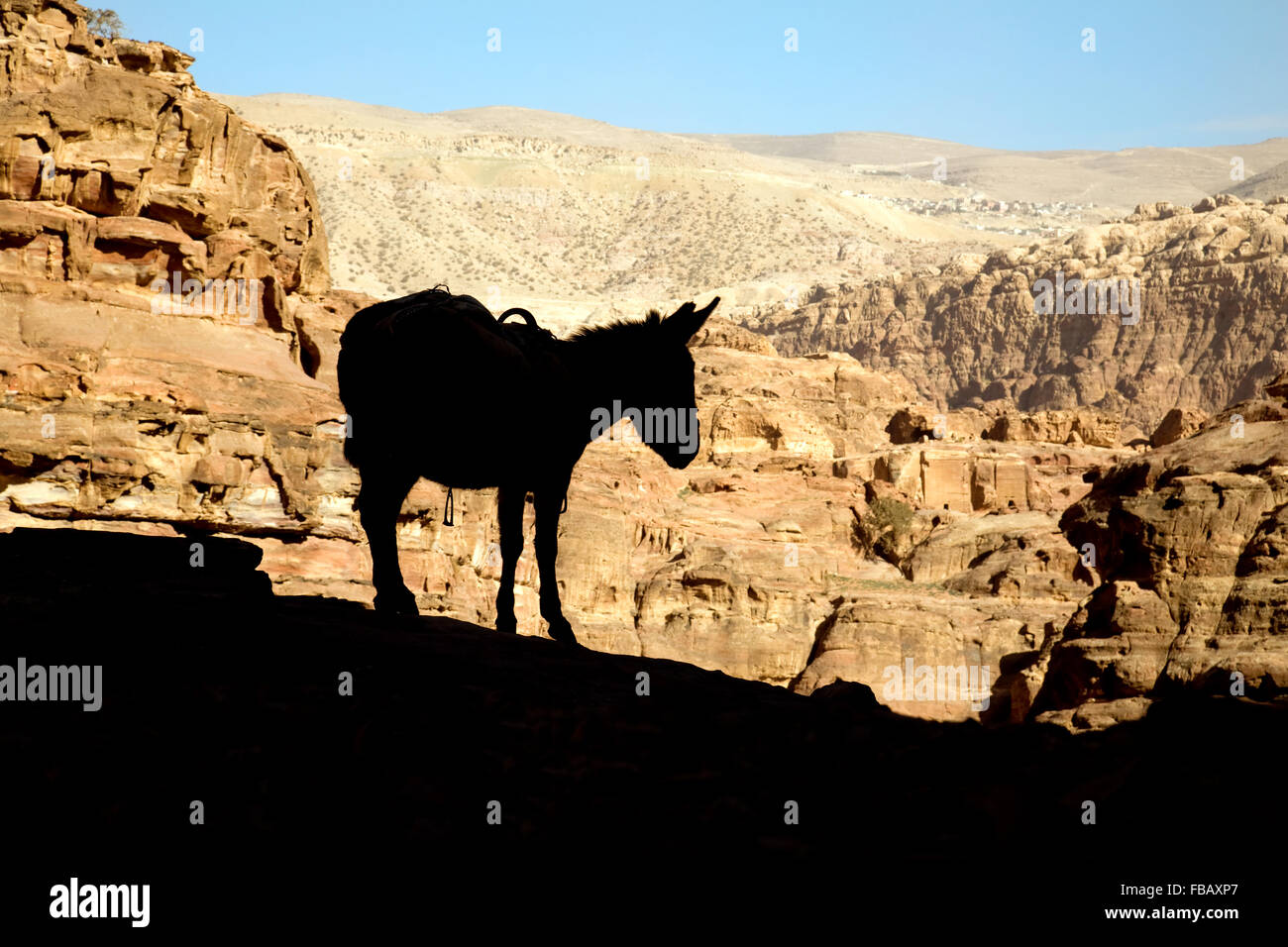 The silhouette of a donkey against the sunlit mountains of Jordan, Middle East, Asia - Stock Image