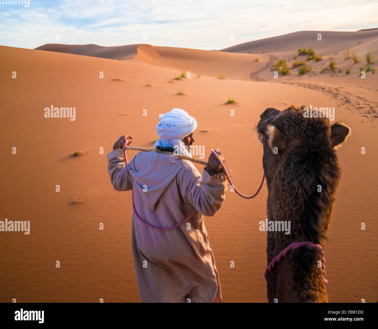 Man leading camel, Erg Chegaga Morocco - Stock Image