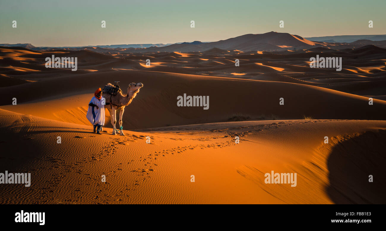 Man and camel, Erg Chebbi Morocco - Stock Image