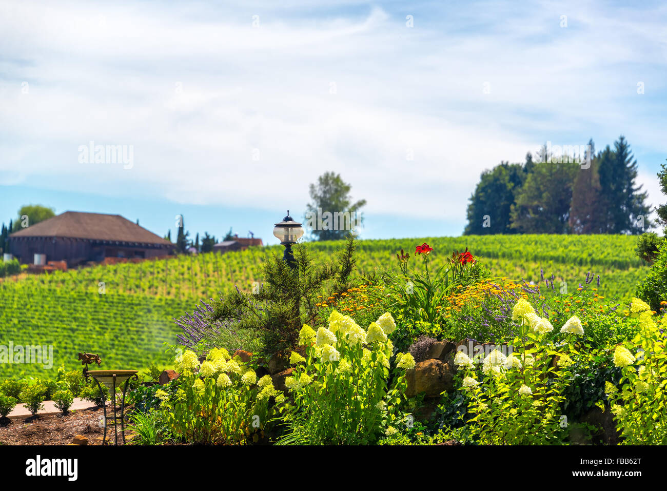 Flowers in Oregon wine country near Dundee - Stock Image