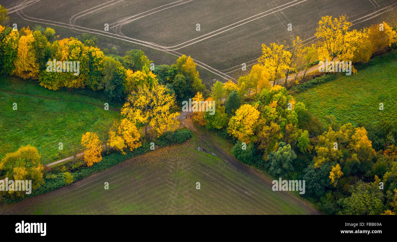 Aerial view, lanes, paths, crossroads, crossroads Avenue, autumnal bushes, autumn leaves, Dortmund, Ruhr area, - Stock Image