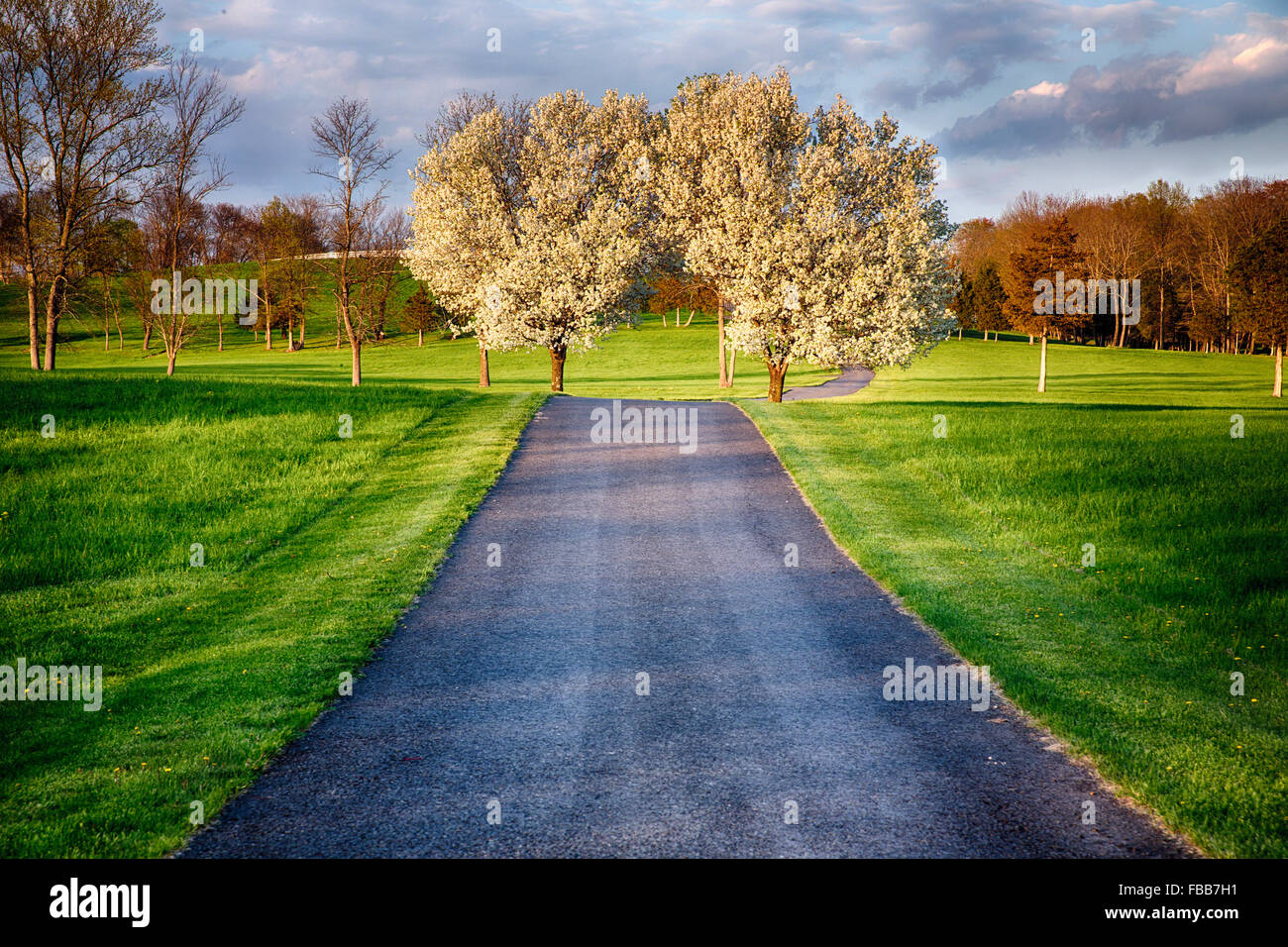 View of a Country Road Crossing a Farm with Two Flowering Trees, Pottersville, Hunterdon County, New Jersey - Stock Image
