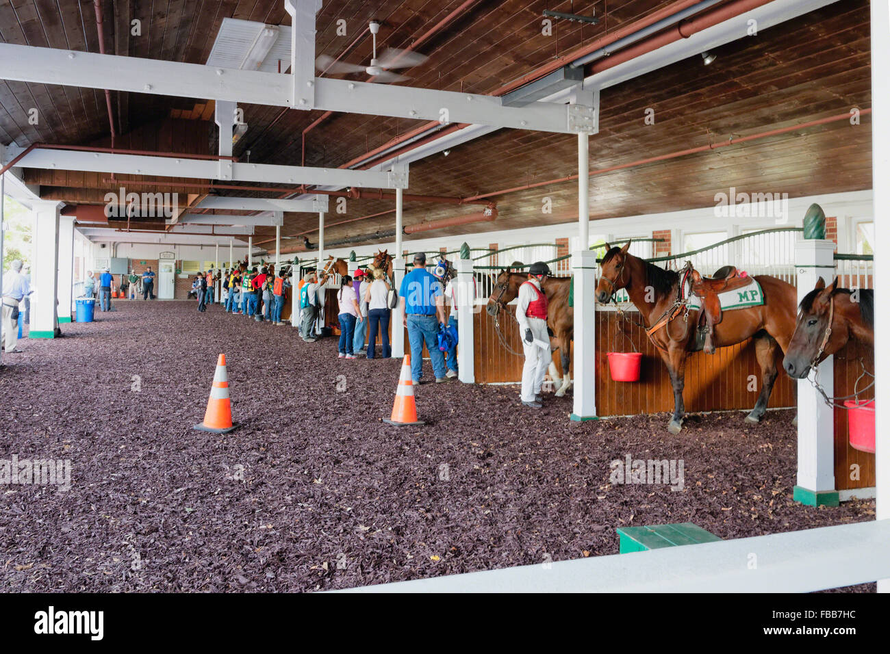 Race Horses in a Stable Being Prepared for a Race, Monmouth Park Race Track, Oceanport, New Jersey - Stock Image