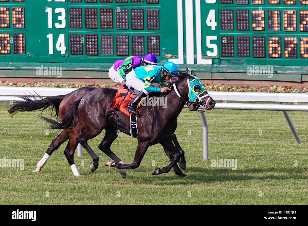 Two Horses with Jockeys Racing Head-To-Head at Monmouth Park Race Track, Oceanport, New Jersey - Stock Image