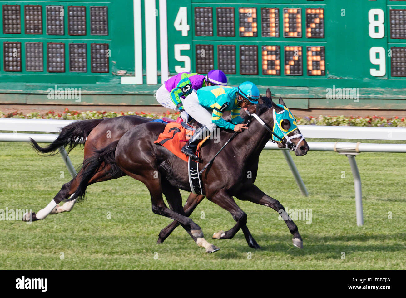 Horseback Racing Head-To-Head at Monmouth Park Race Track, Oceanport, New Jersey - Stock Image