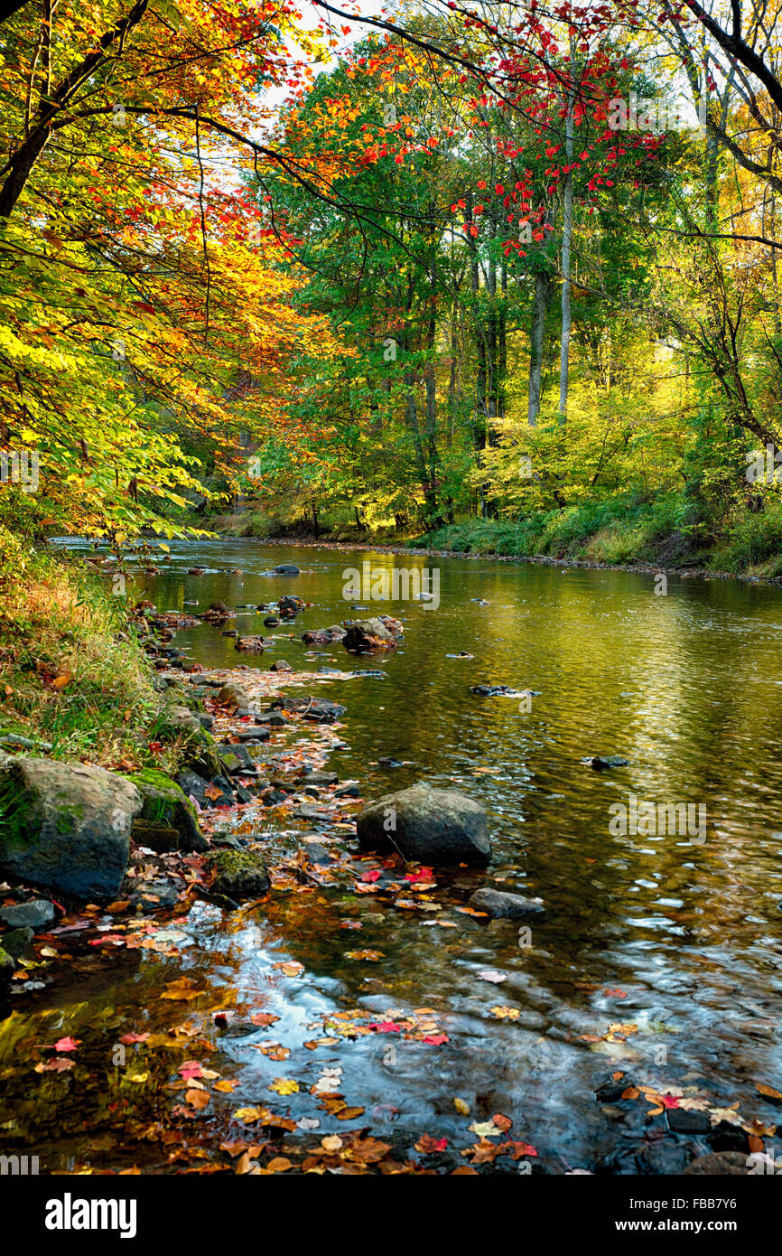 View of the Black River During Fall Foliage, Oldwick, Hunterdon County, New Jersey - Stock Image