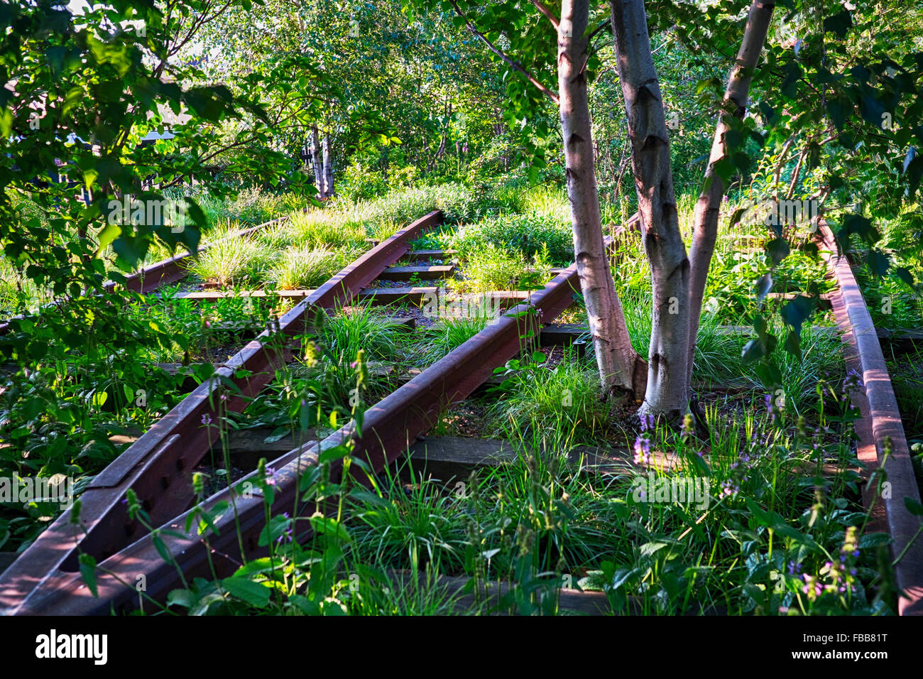 Birch Trees Growing Between Abandoned Railtracks of the Manahattan Central Railroad, High Line Park, Manhattan, - Stock Image