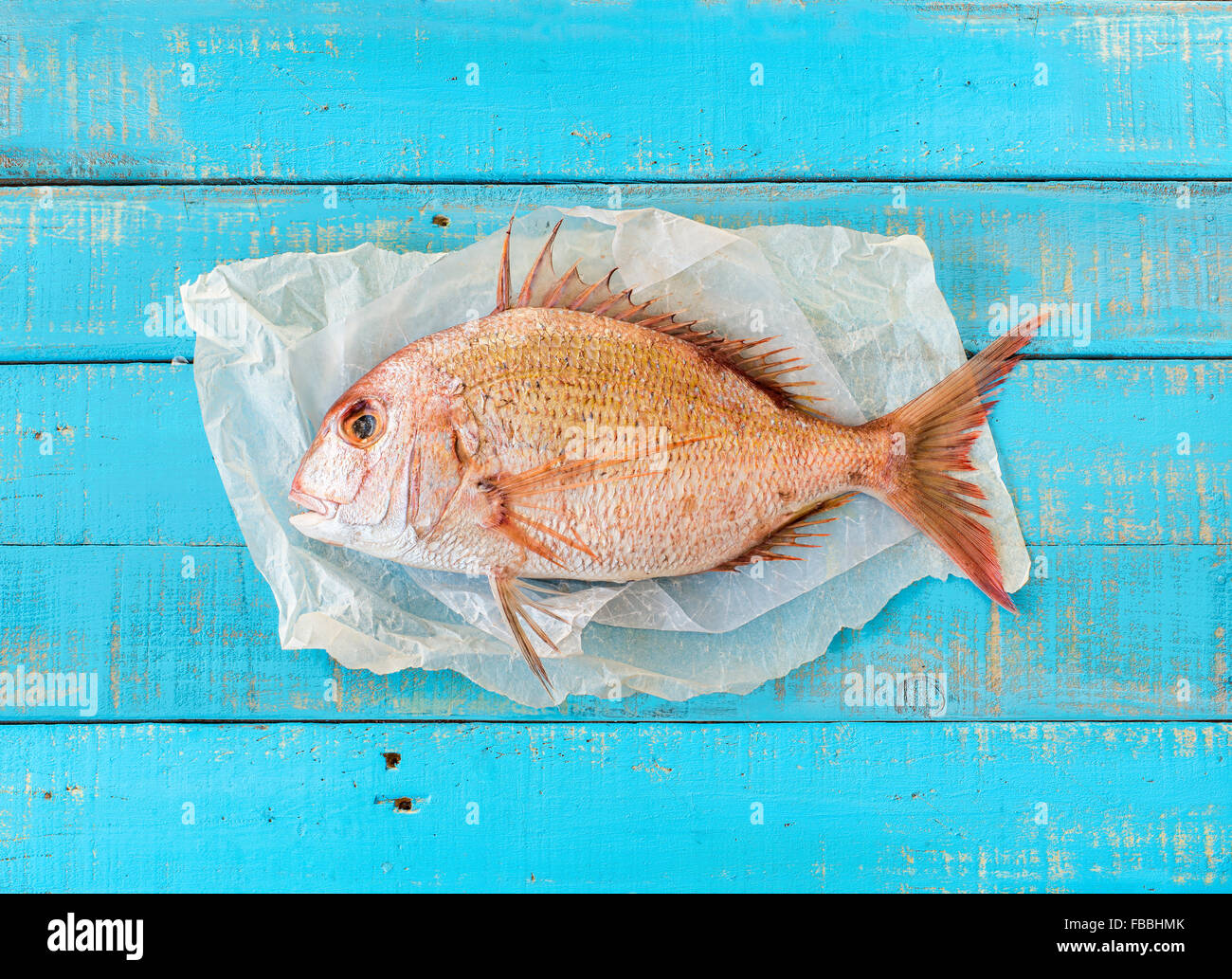 Porgy fish (Pagrus pagrus), also known along the Gulf Coast as white Snapper, on a mediterranean blue wooden table. Stock Photo