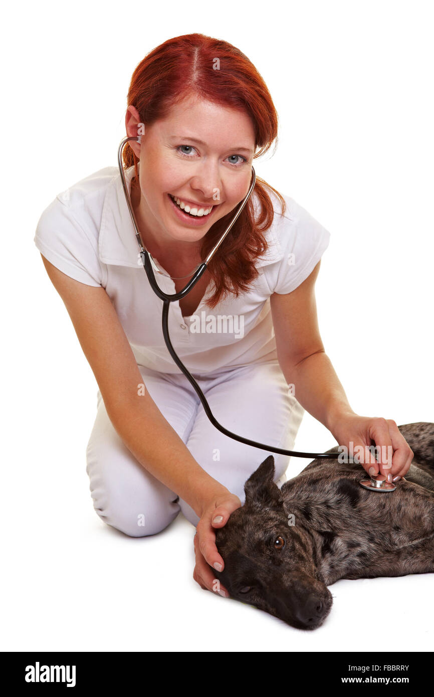 Happy female vet examing sick dog laying on the floor - Stock Image
