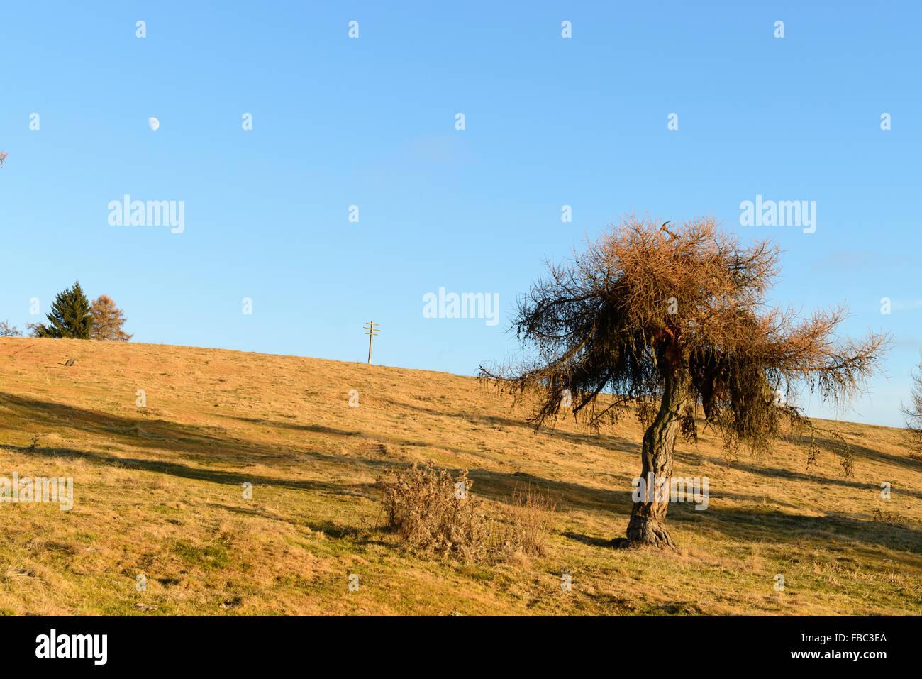 Almwiese im Herbst / Meadow in autumn - Stock Image