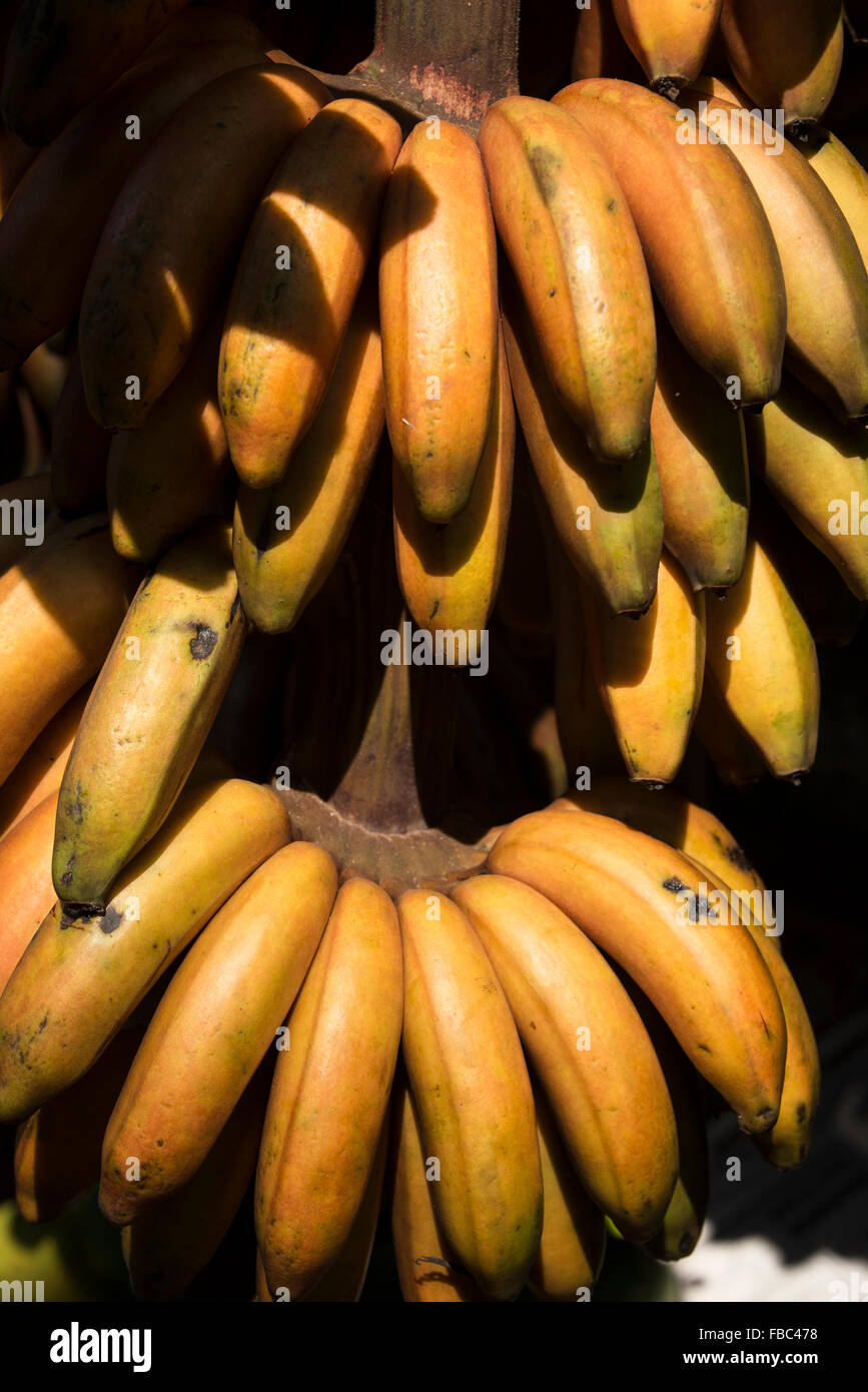 A bunch of Indian grown red bananas on sale at a fruit & veg stall beside the  A1 highway (Colombo-Kandy Highway - Stock Image