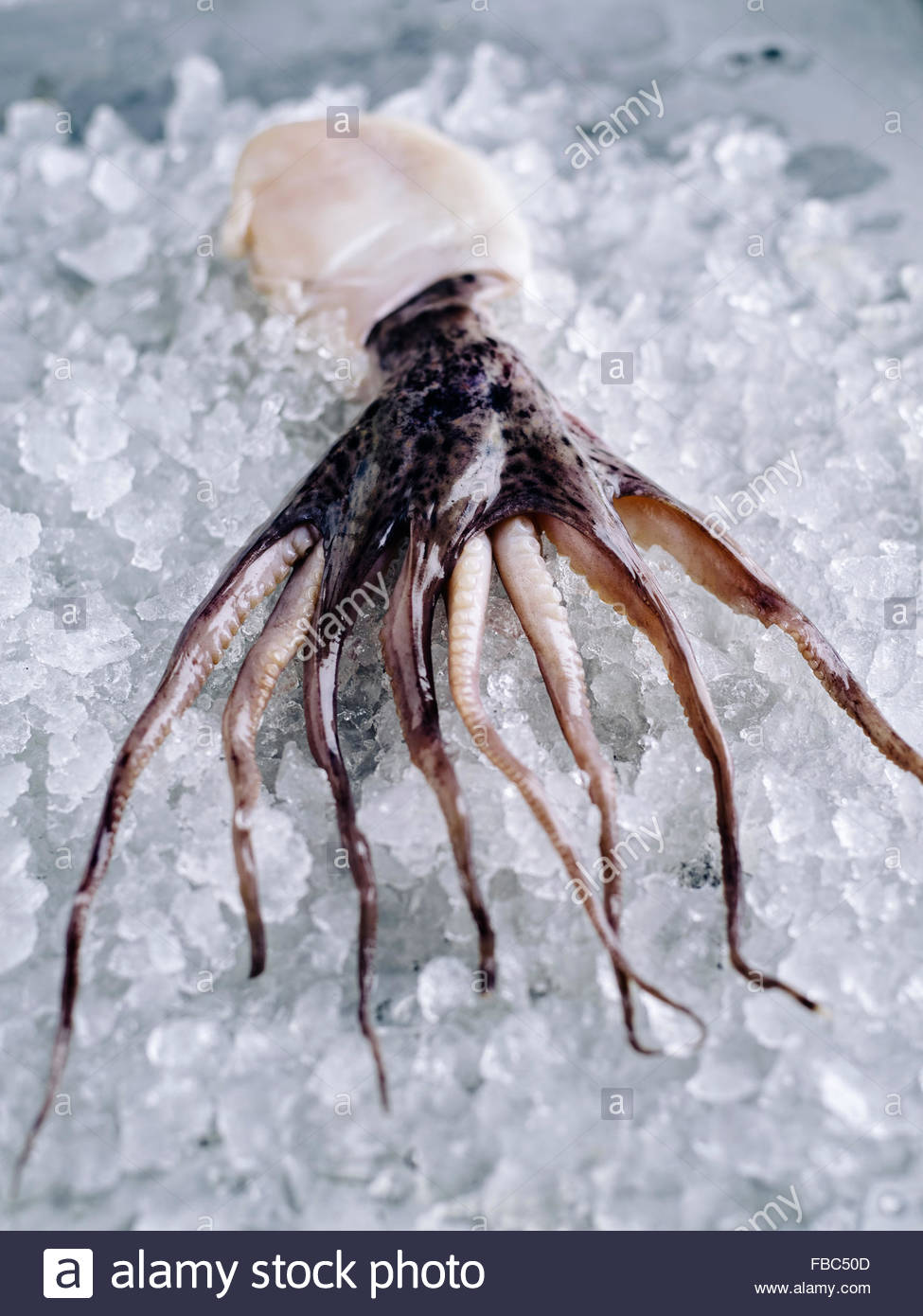 A small whole octopus on ice on rustic metal surface - Stock Image