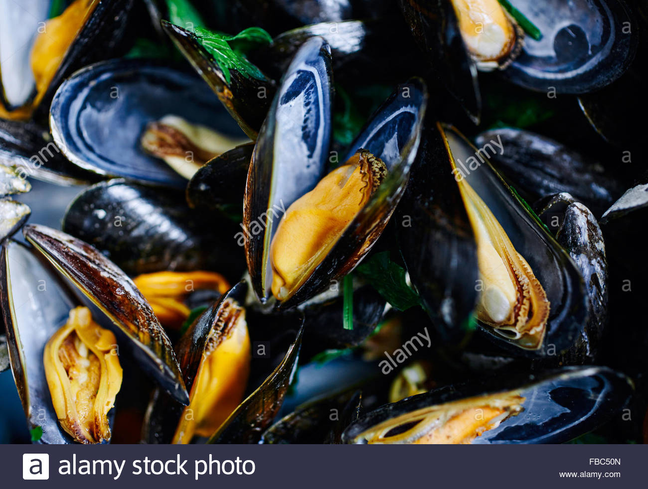 Close up shot of cooked blue mussels - Stock Image