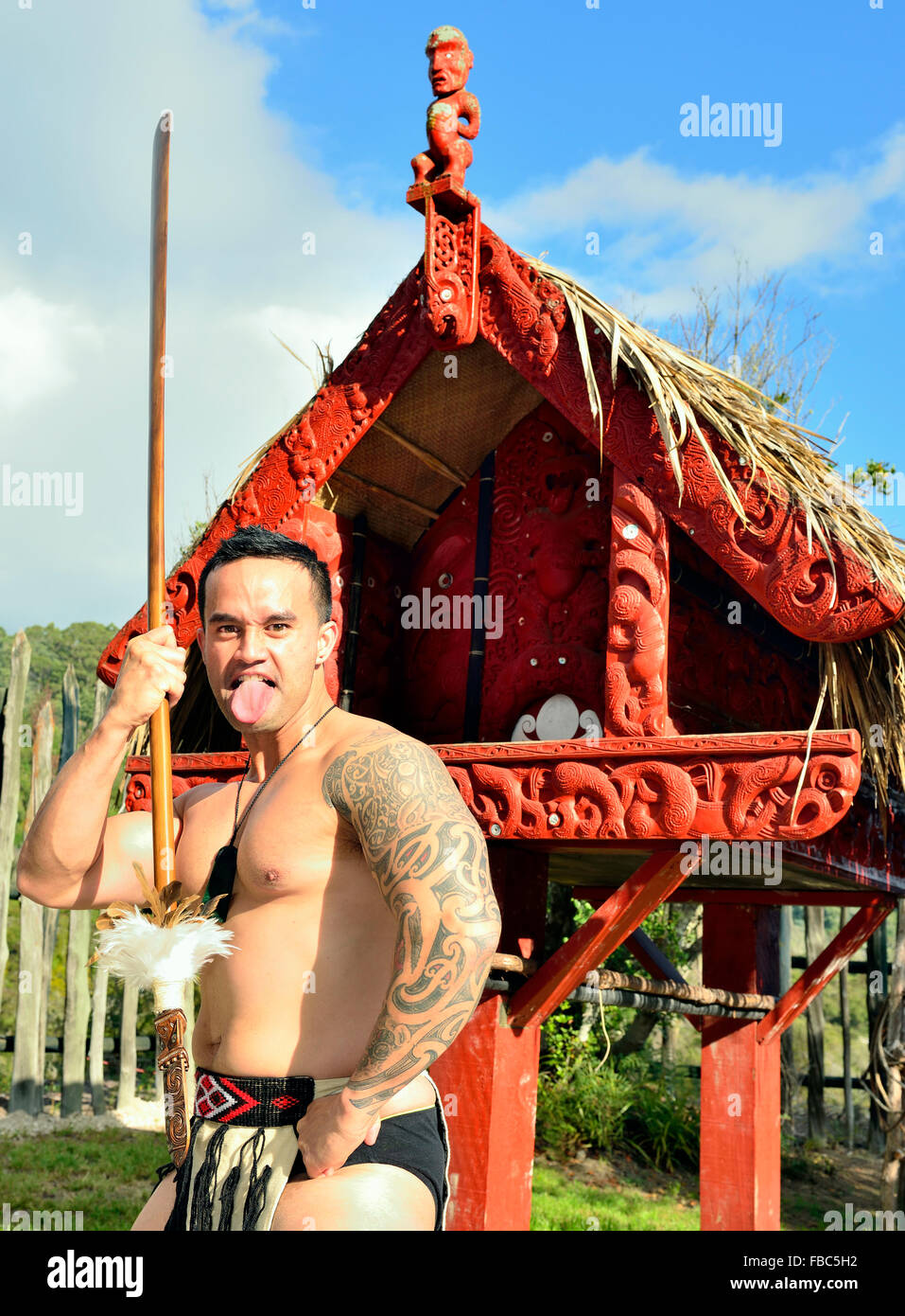 A Maori warrior troupe member at Te Puia .performs a war haka with a spear at  Rotorua s New Zealand's Maori tourist Stock Photo