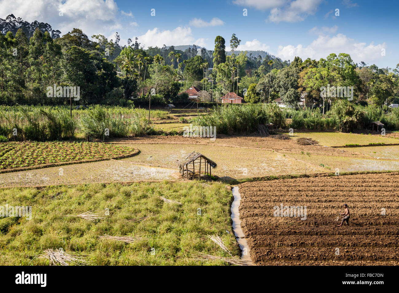 subsistence farming how to grow your own food and nothing more