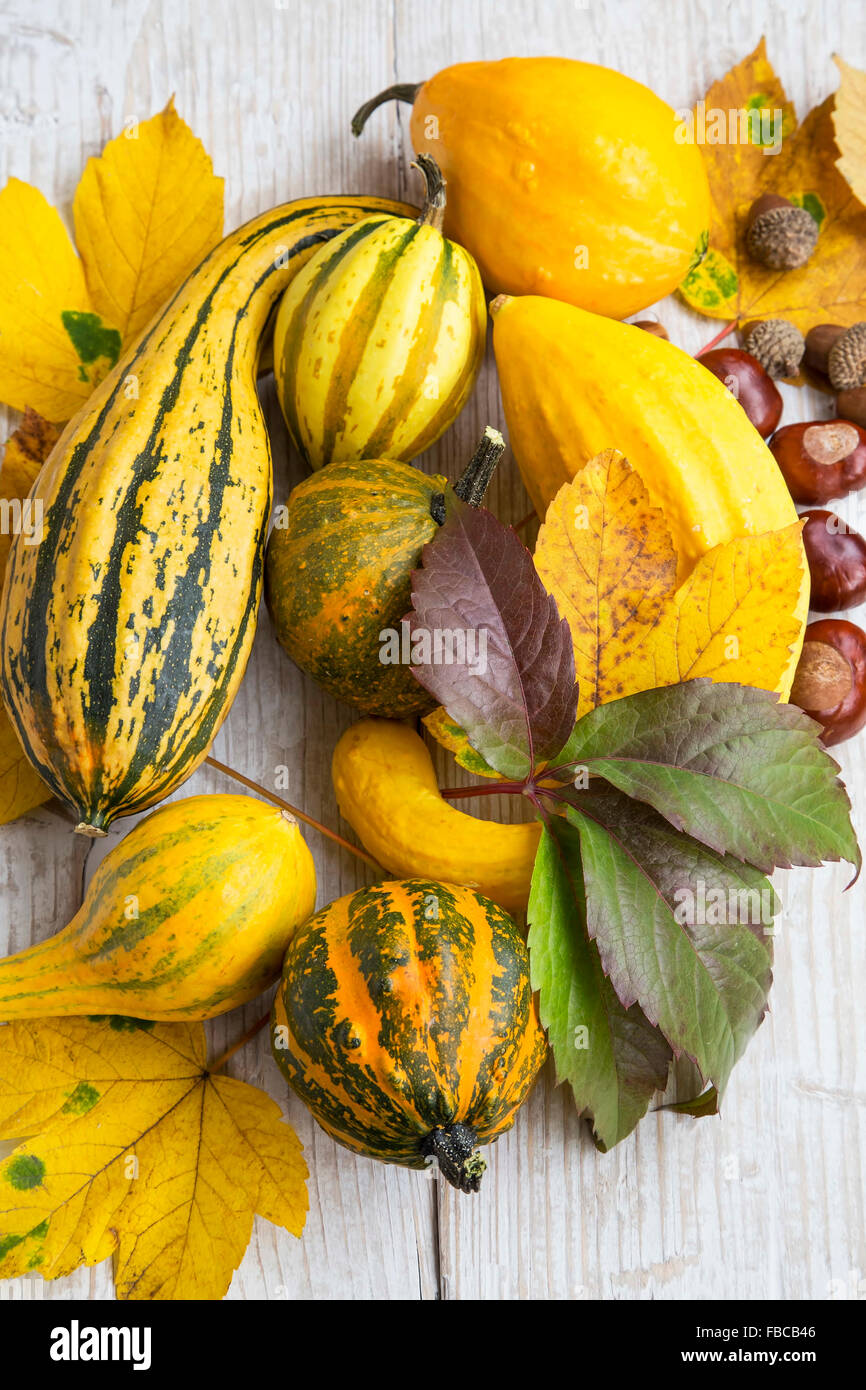 Autumn Pumpkins Assortment with Autumn Leaves, Chestnuts and Acorns - Stock Image