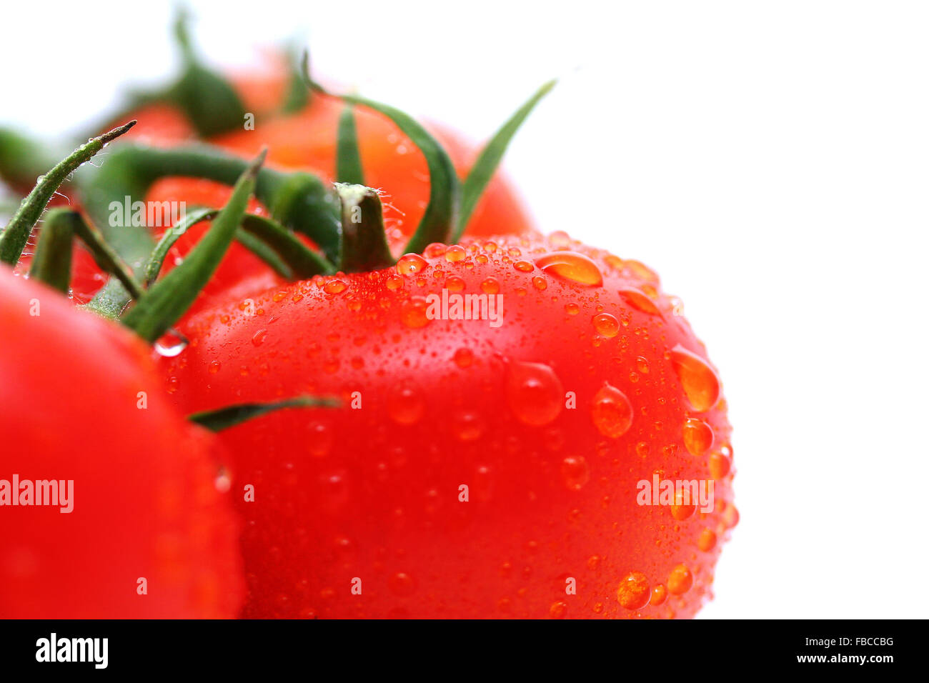 Fresh vine-ripened tomatoes on a white background - Stock Image