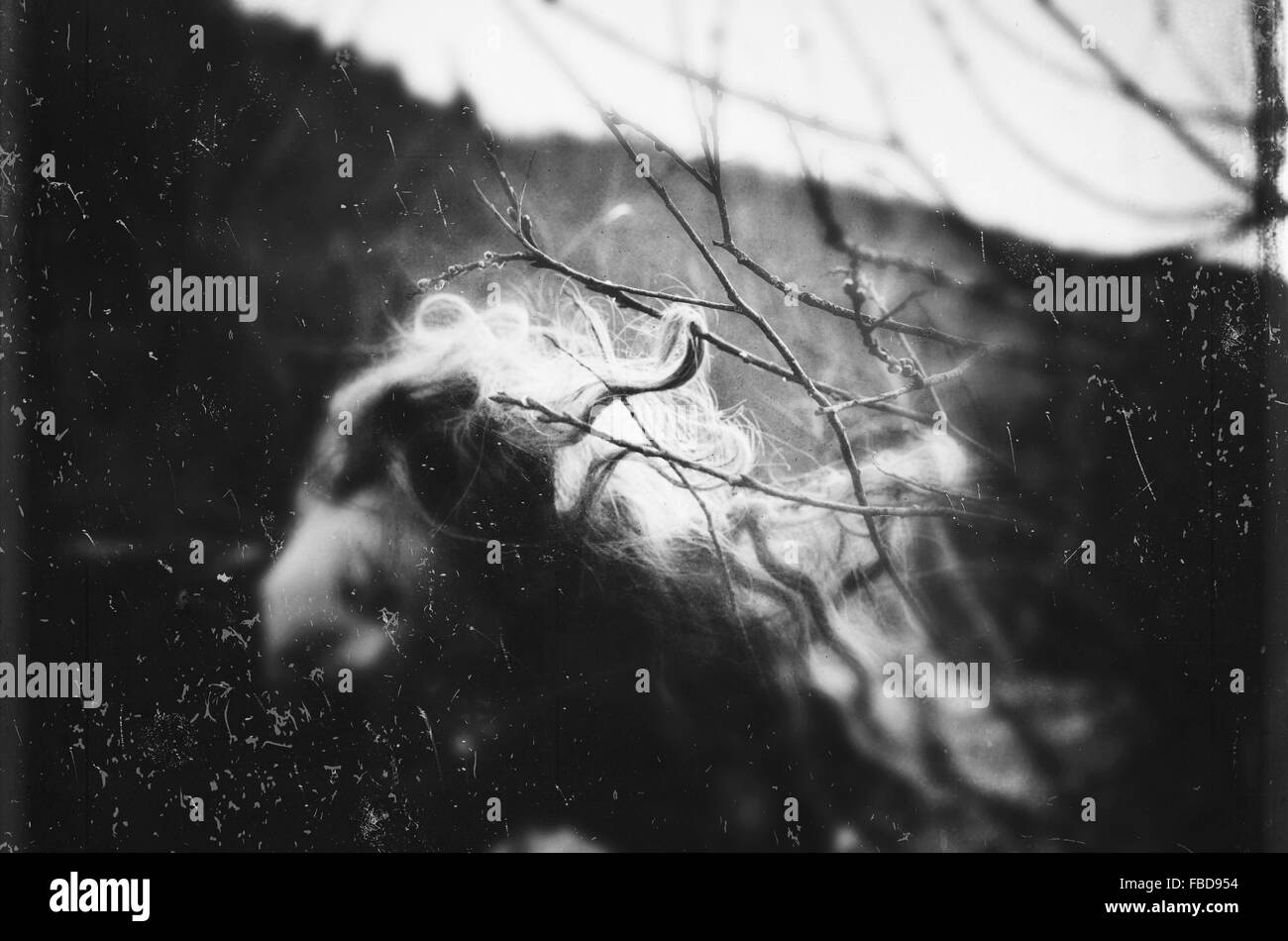 Woman Hair Stuck On Bare Tree - Stock Image
