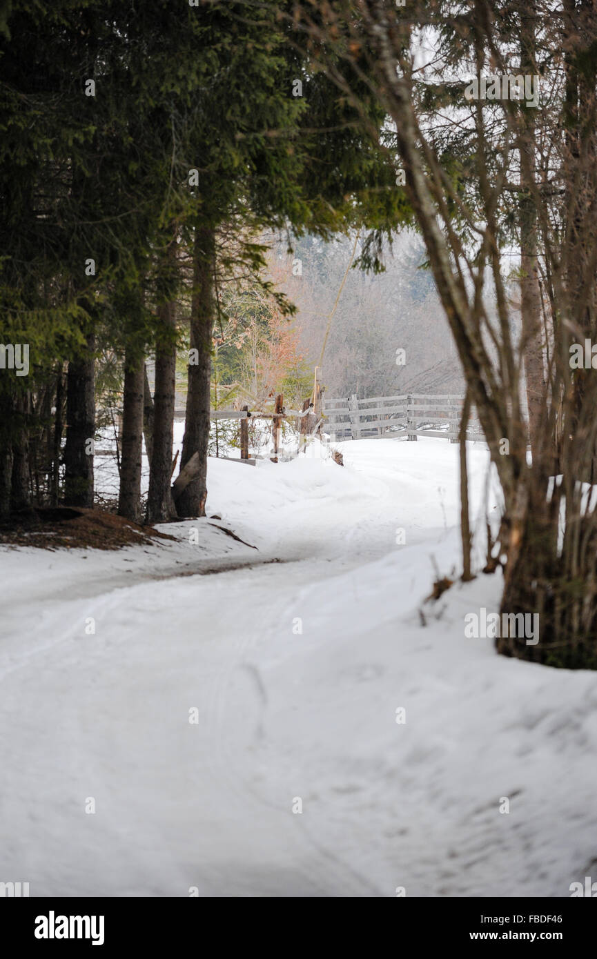 Pine trees snow road stock photos pine trees snow road - Images of pine trees in snow ...