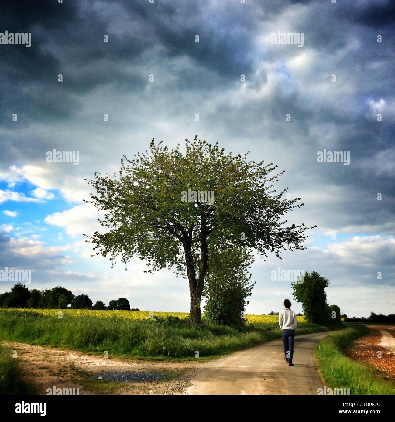 Rear View Of Man Walking On Dirt Road In Cultivated Field - Stock Image