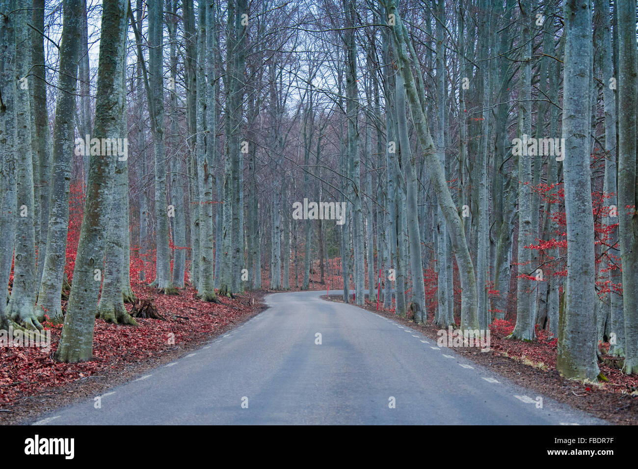 View Of Road Amidst Trees In Forest Stock Photo