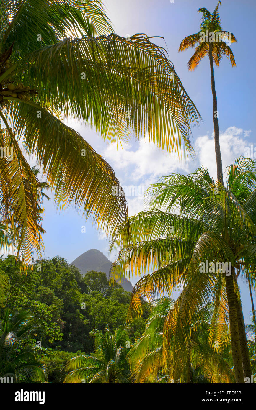 Palm trees & Grosse Piton, St Lucia Stock Photo