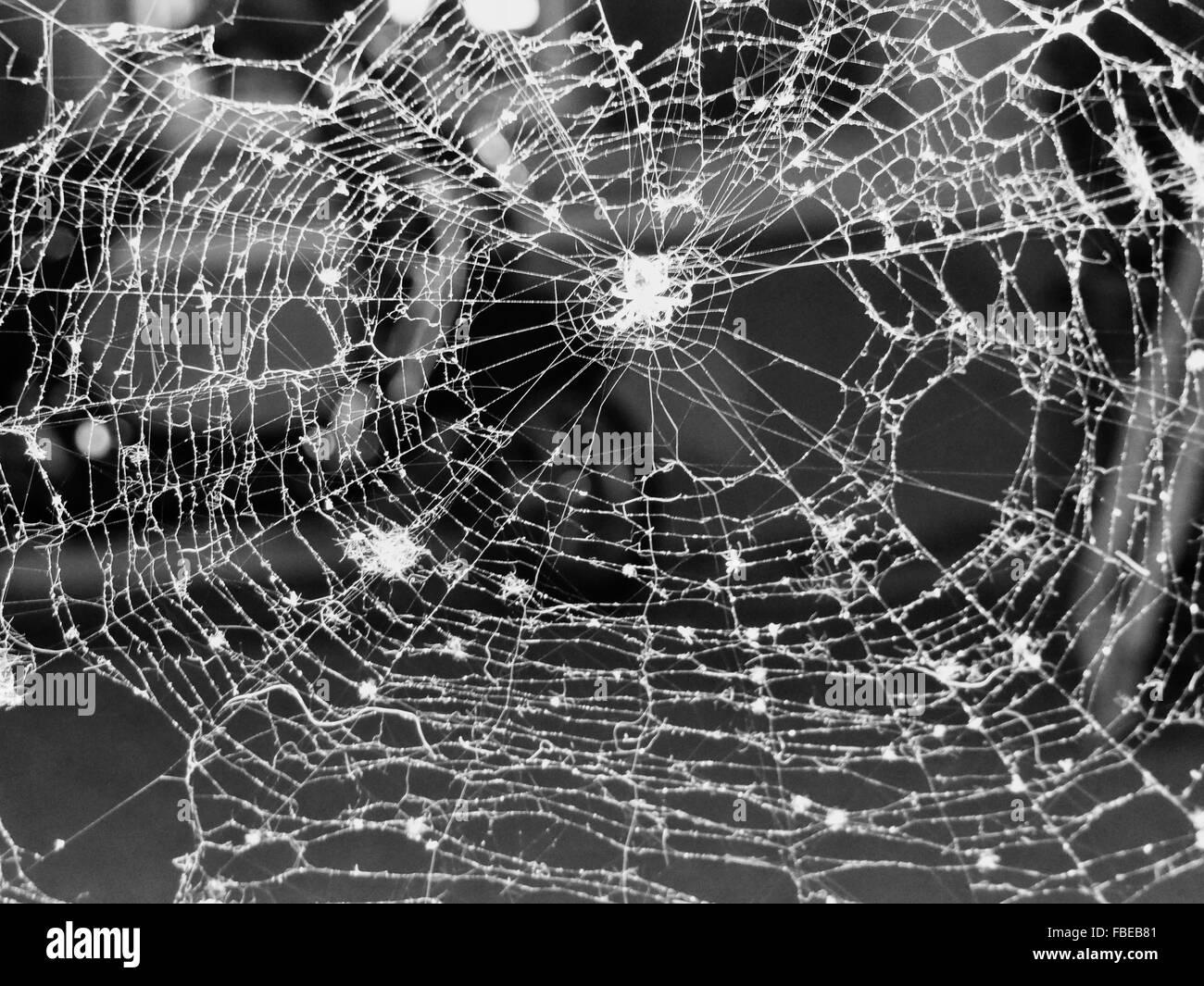 Full Frame Shot Of Spider Web - Stock Image