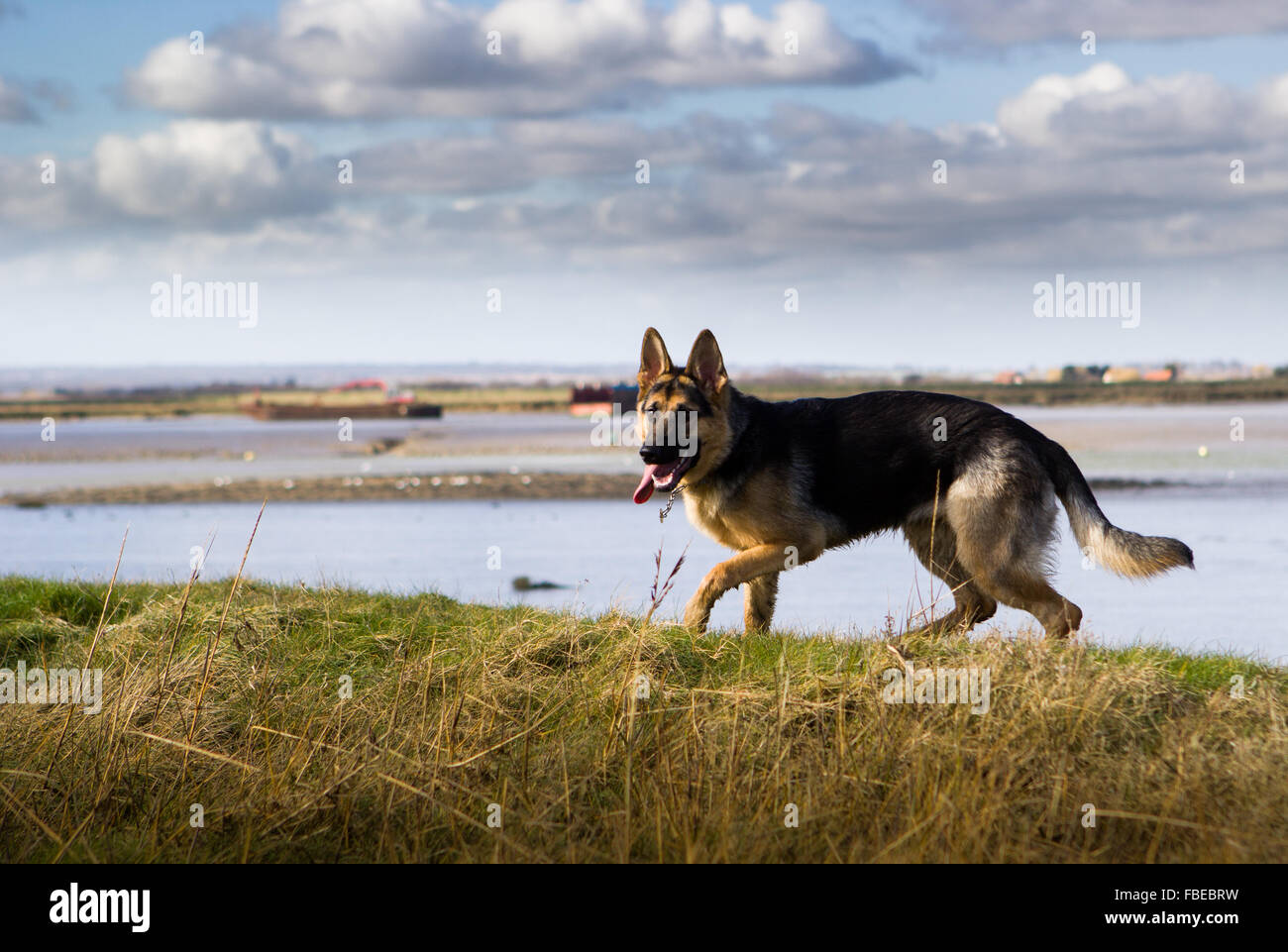 Mayland Stock Photos & Mayland Stock Images - Alamy