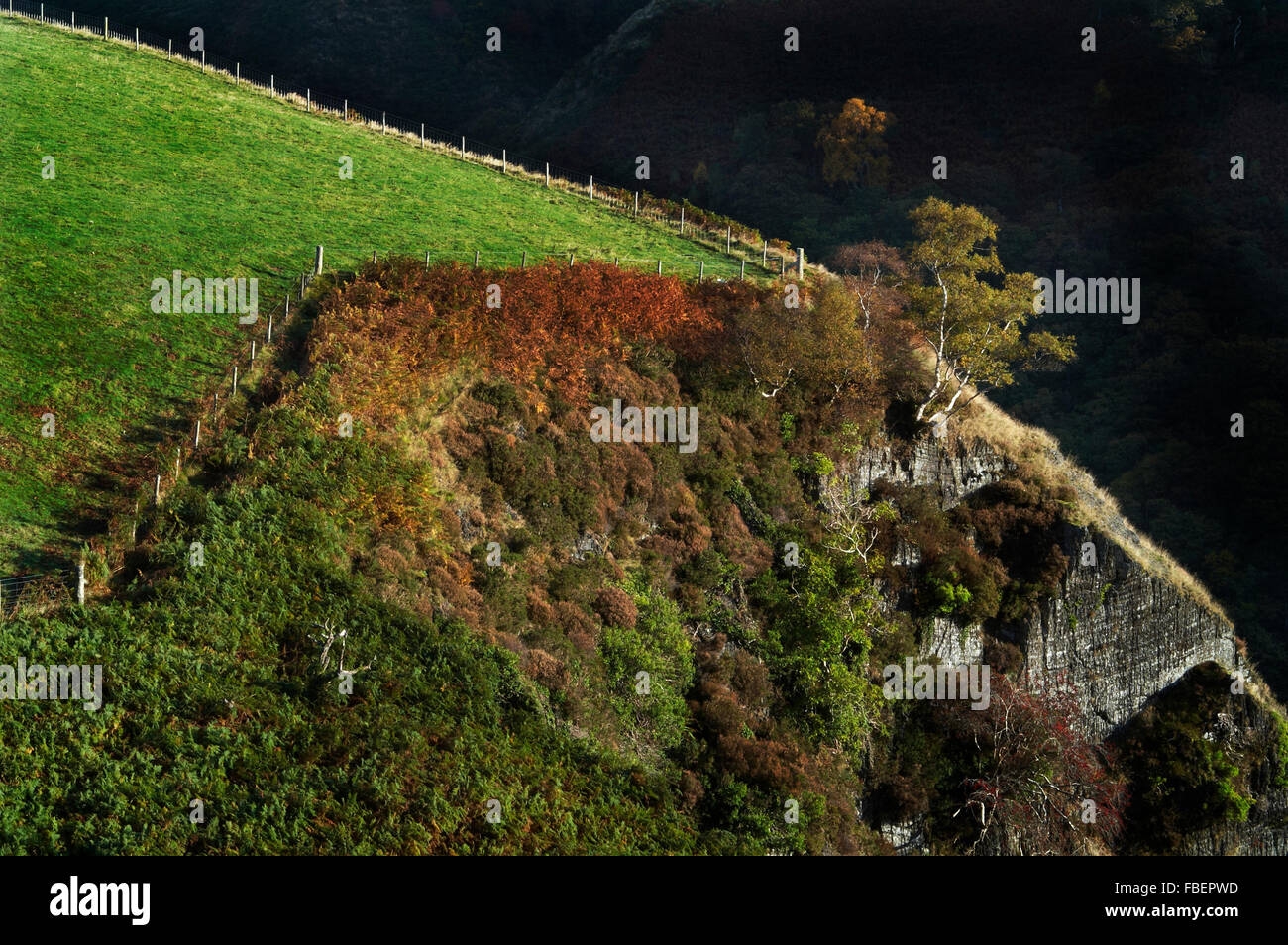 Tree precariously hanging onto edge of cliff top - Stock Image