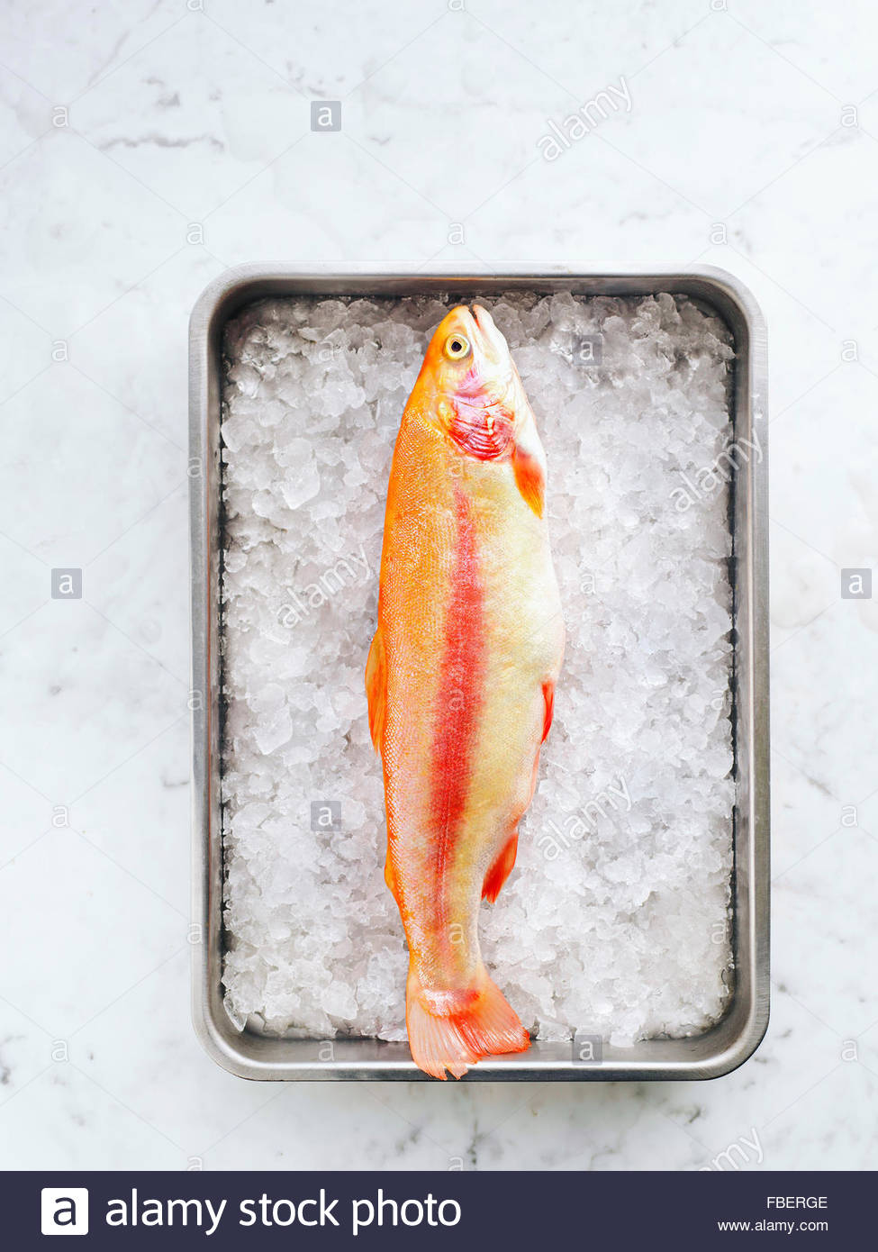Golden rainbow trout in a pan with ice on marble table - Stock Image
