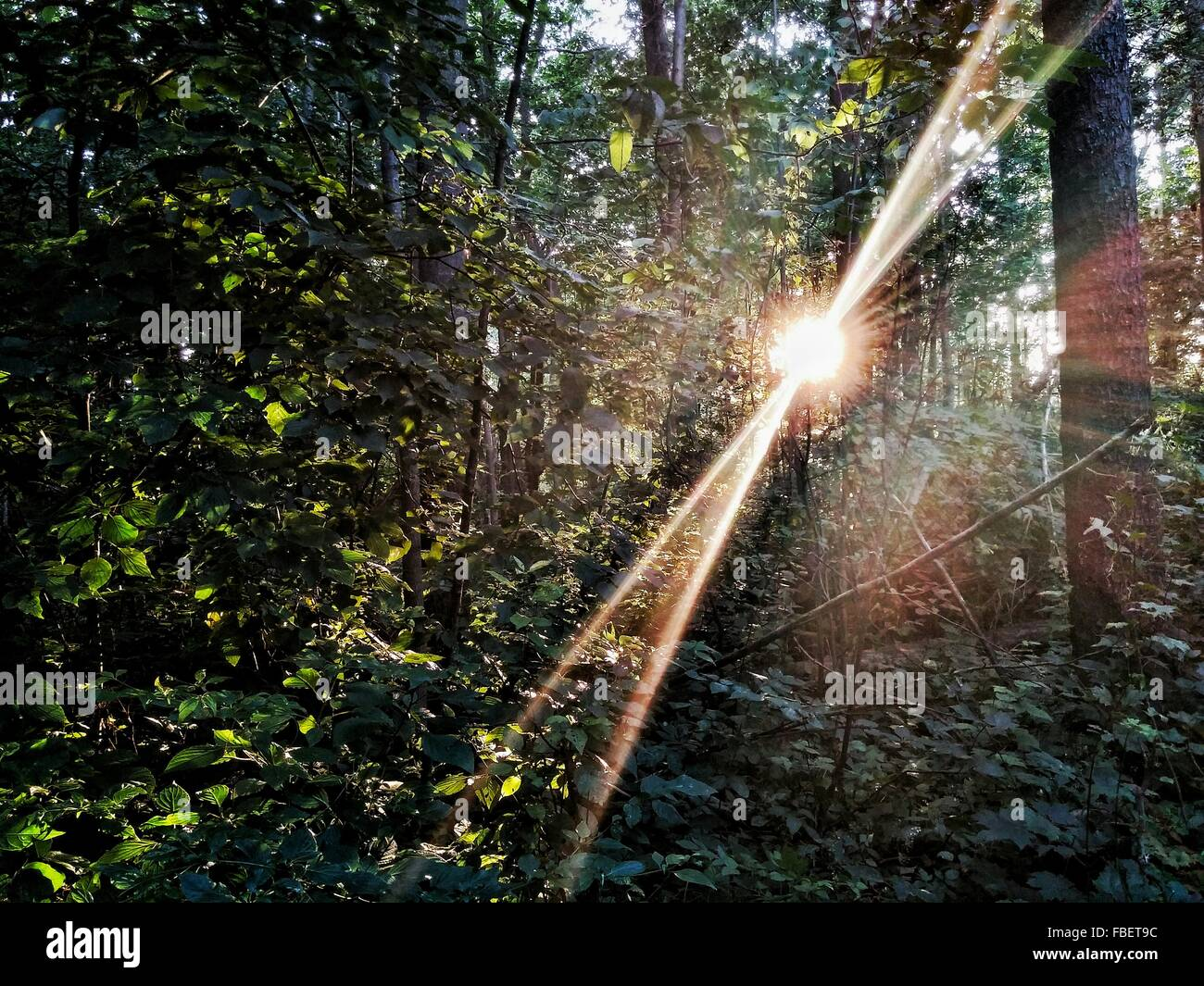 Low Angle View Of Trees Growing In Forest - Stock Image