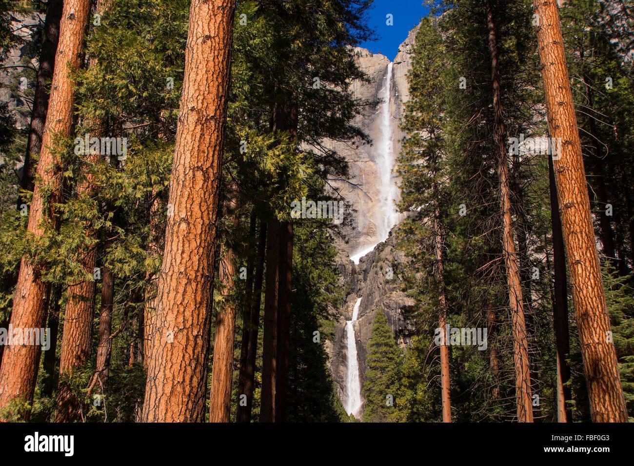 Yosemite falls and redwoods Stock Photo