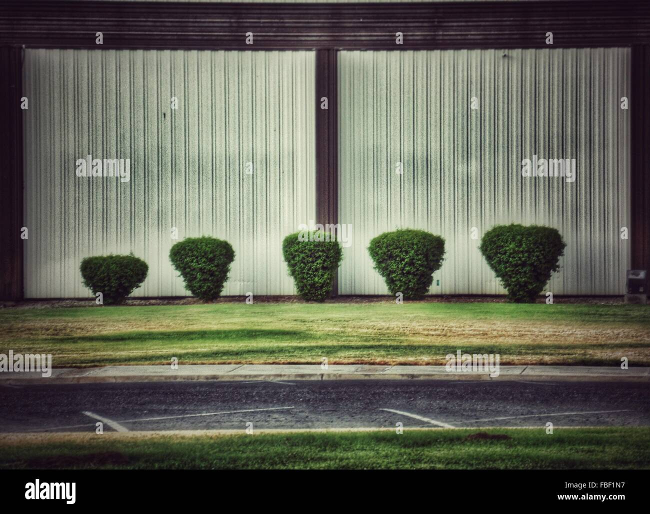Hedges On Lawn By Street - Stock Image