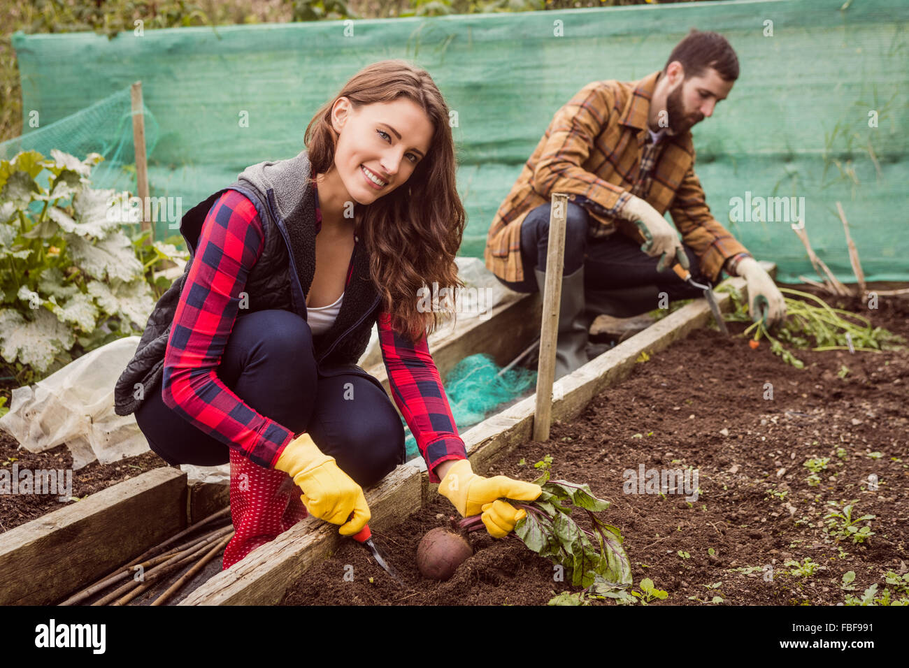 Happy couple harvesting together - Stock Image