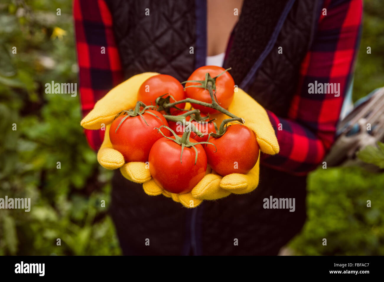Woman with gloves holding tomato - Stock Image