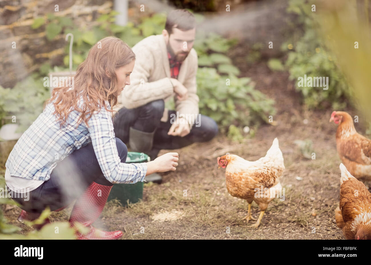 Couple feeding chicken together - Stock Image