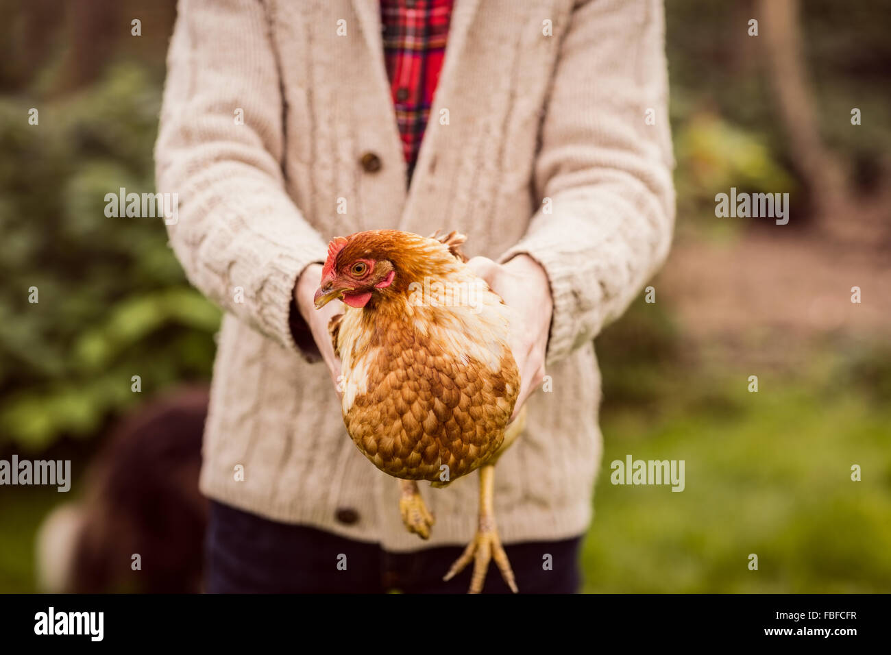 Man holding and showing chicken - Stock Image